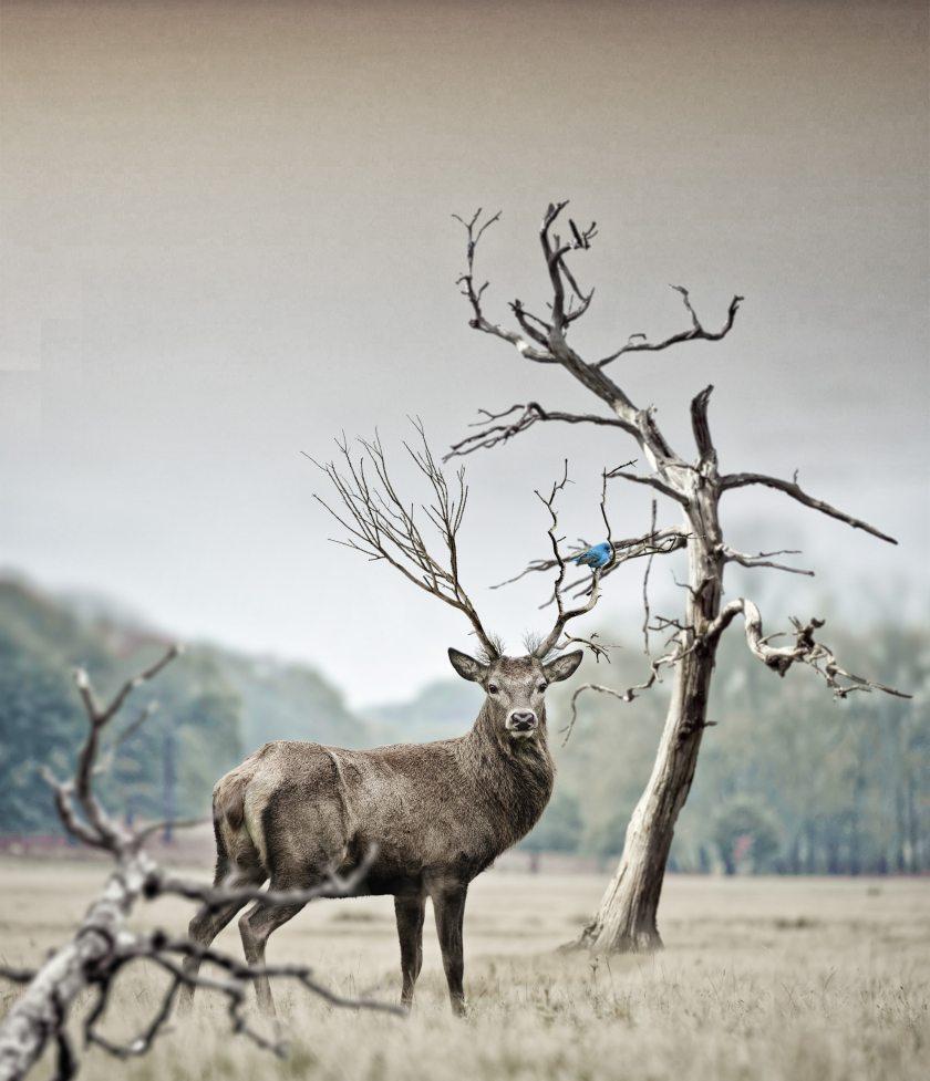 animal-antler-antlers-219906