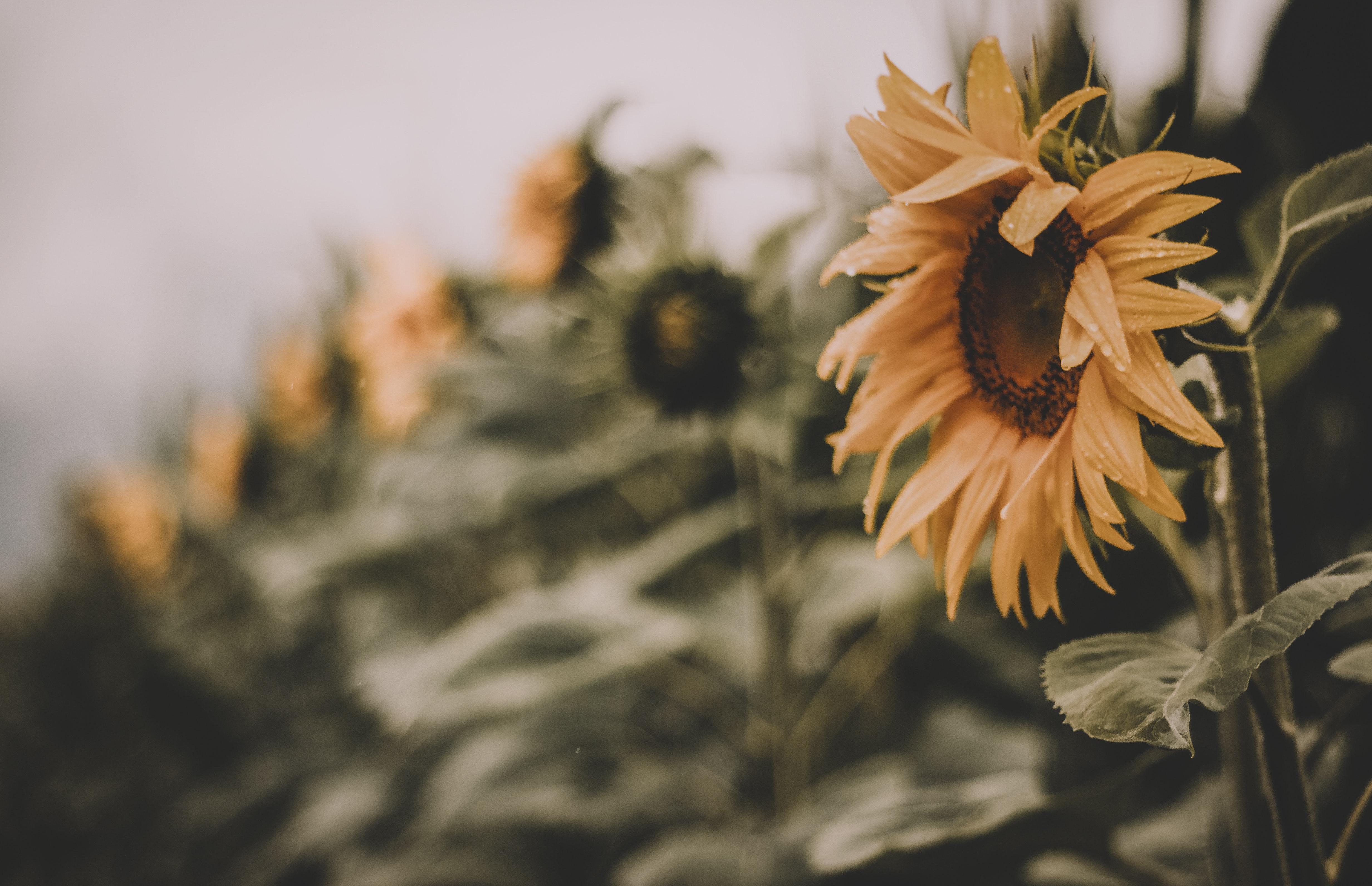 beautiful-blossom-blur-1157940
