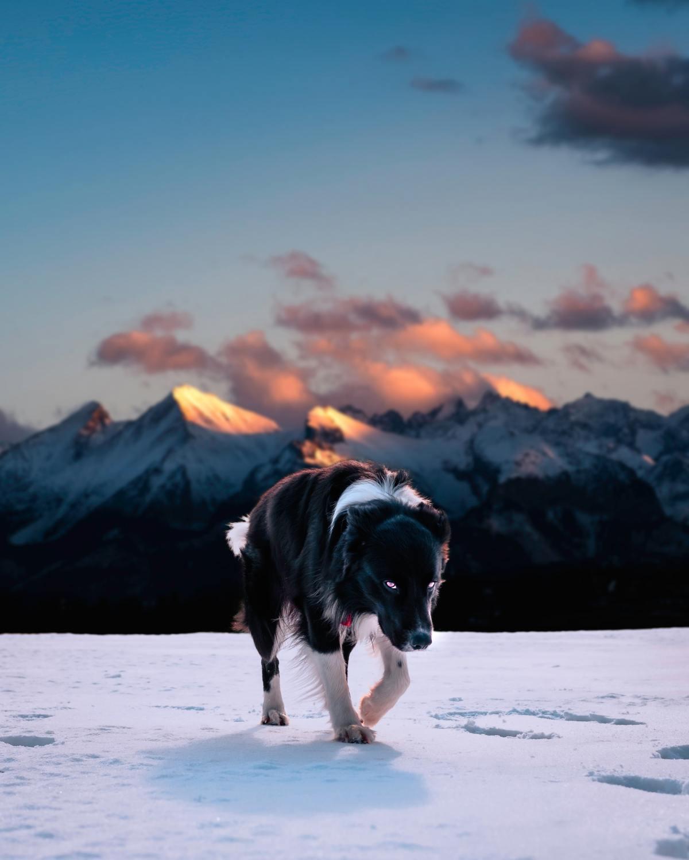 The Hopeful Wanderer – A DoggedDecree