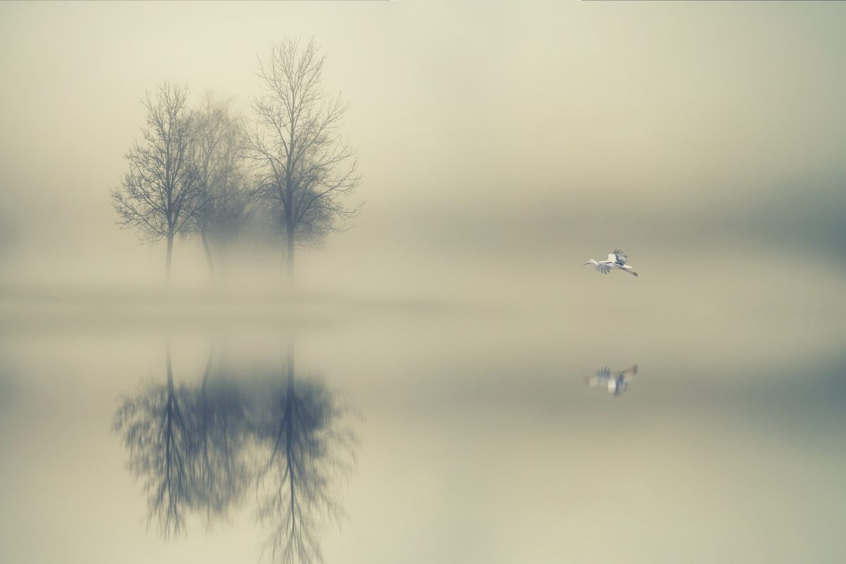 The Hopeful Wanderer – MirrorMimic