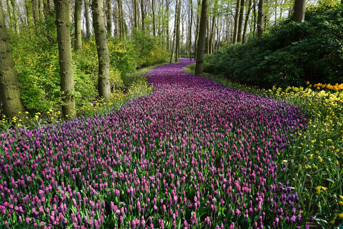 The Hopeful Wanderer – A Pink Path forPilgrimage